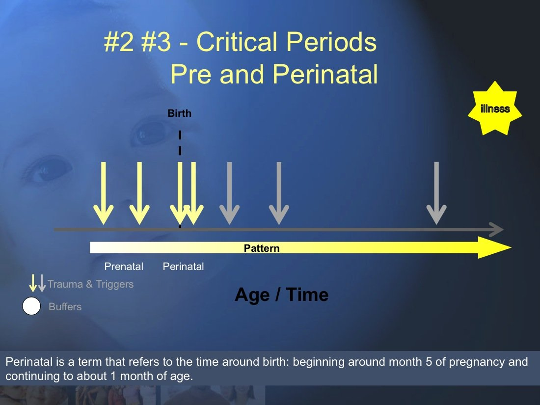 The Chronic Illness Model (7 & 8) (Developmental Trauma # 2 Trauma during the Prenatal (7) and Perinatal (8) time frames are probably critical periods for the initiation of risk for Chronic Illness