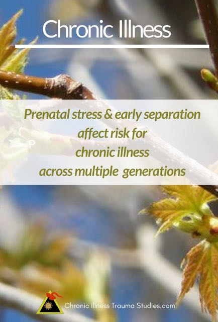 Prenatal stress and early separation affect risk for chronic illness across multiple generations.