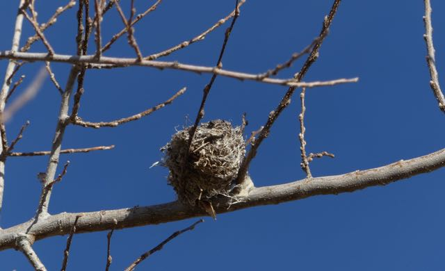an empty hummingbird-nest reflects how separating a mother and her newborn can profoundly affect the short and long-term health of her baby, including affecting risk for chronic illness and other types of chronic diseases. Researchers have been surprised yet results are rarely taught in medical school