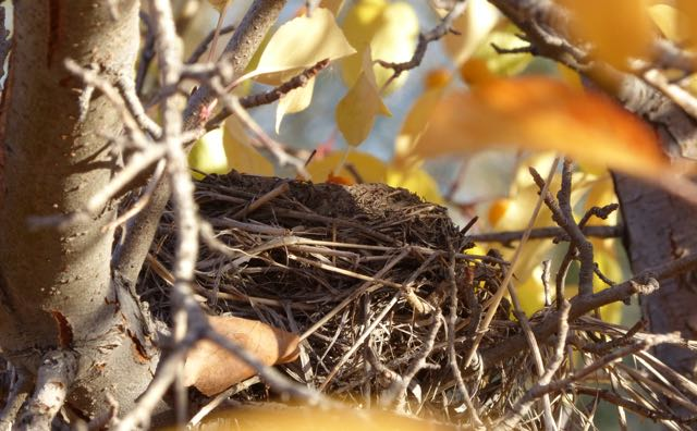 An empty nest - Early separation increases risk for chronic illness later in life such as type 1 diabetes, multiple sclerosis and other autoimmune diseases