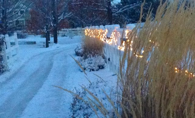 It's beginning to look a lot like Christmas! - grasses and lights on a fence 6 Holiday tips including ideas when you are feeling sad. You don't have to do this alone.in Tumbling the Stone: a chronic illness blog