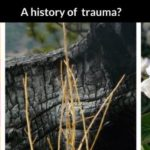 Trauma can be Overt. It can also be unrecognizable. And It's Not Psychological